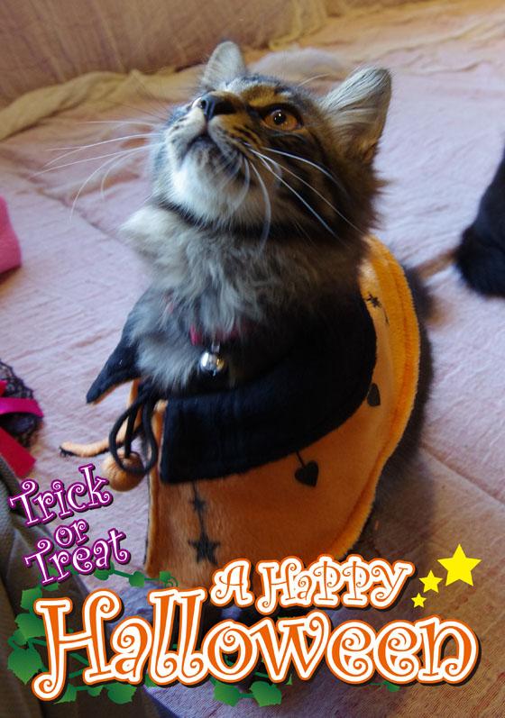 ハロウィン猫4