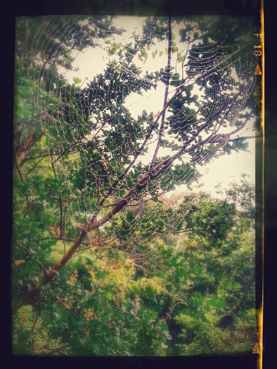 20140629_052850-EFFECTS