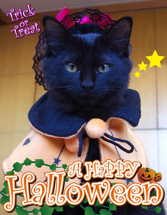 ハロウィン猫1