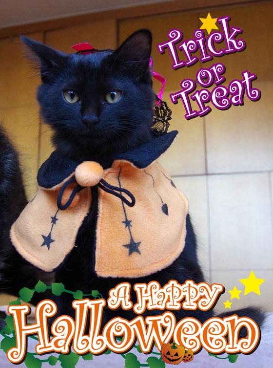 ハロウィン猫2